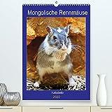 Mongolische Rennmäuse (Premium, hochwertiger DIN A2 Wandkalender 2022, Kunstdruck in Hochglanz)