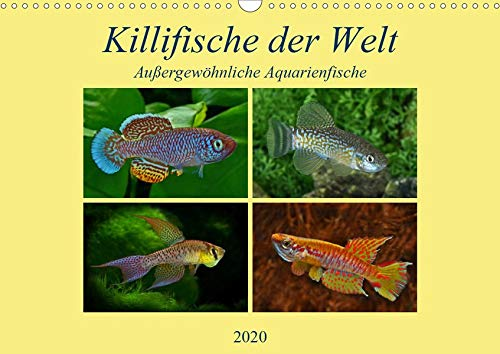Killifische der WeltCH-Version (Wandkalender 2020 DIN A3 quer): Farbenprächtige, außergewöhnliche Aquarienfische überraschen Experten und Laien. (Monatskalender, 14 Seiten ) (CALVENDO Tiere)