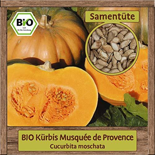 BIO Kürbis Samen Sorte Musquée de Provence (Cucurbita moschata) Gemüsesamen Kürbis Saatgut