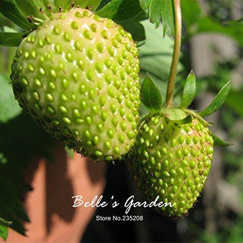 100pcs 9 variétés Choix Strawberry Graines Fraise Fruit Graines pot Bonsai Balcon Patio Jardin Plante Bricolage Vert