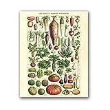 Kunstplakat 50x70cm Kein Rahmen Antikes Gemüse Vintage