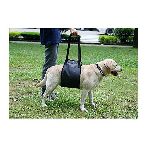 CF-Dog Wheelchair Rollstuhl für Rückbeine, Hundehilfe, schwarz Alter, behinderter Hund, Hinterbeinschutz, Haustierkraft, Hund Laufhilfe, Gürtel Hundetrolley mit Rollen