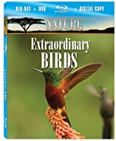 Nature: Extraordinary Birds [Blu-ray] [Import]