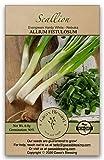 Gaea's Blessing Seeds - Scallion 1000+ Seeds Non-GMO Bunching Evergreen Hardy White Nebuka 90% Germination Rate 3.5g