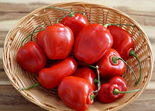 Hot Chili Pfeffer Rocoto Rot - Manzano - Pepper - 10 Samen