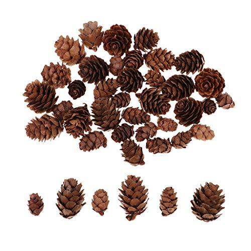 Baoblaze 50 Stück Sortierte Echte Kleine Tannenzapfen Schwarzkiefer Zapfen Kiefernzapfen Natürliche Tannenzapfen