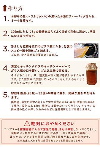 WORLDKOMBUCHA(ワールドコンブチャ)コンブチャスターターキットスコビー2個セット【コンブチャ培養キット/菌株(スコビー)2個と日本語説明書セット※茶葉は付属していません】
