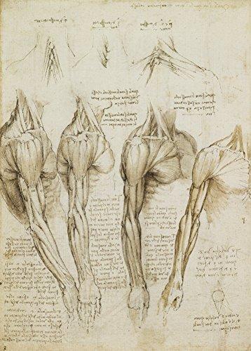 World of Art Global Vintage Anatomie Leonardo da Vinci Muskeln der Schulter, Arm und Hals, Italien, 14-15 Jahrhundert. 250 g/m², glänzend, Kunstdruck, A3, Reproduktion
