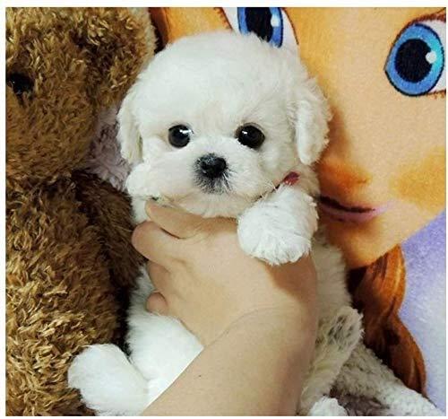 Chien de nounours réaliste 9,8 pouces, chien de jouet de figure réaliste fait à la main, chien de chiot en peluche en peluche, chien en peluche pour tout amateur de chien, poupée en peluche cadeau (D)