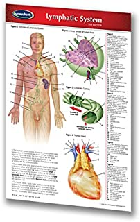 Lymphatic System Guide - Laminated 4.5