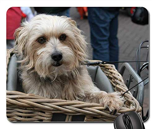 Mauspad - Hund Hund im Fahrradkorb süß