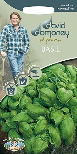 Mr Fothergills???herbes???David Domoney Basil Sweet???650?graines