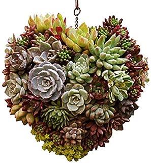 living wreath planter