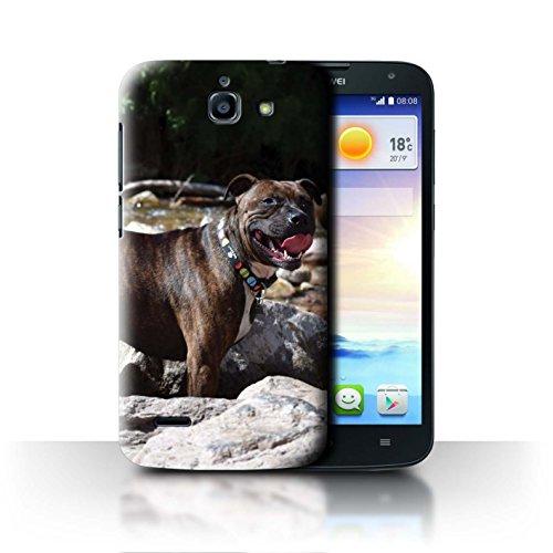 Hülle Für Huawei Ascend G730 H&/Eckzahn Rassen Staffordshire Bull Terrier Design Transparent Ultra Dünn Klar Hart Schutz Handyhülle Case