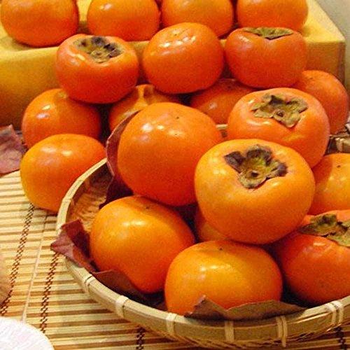Vente chaude! Plaqueminier arbres fruitiers Graines - Diospyros 30pcs kaki
