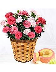 母の日 カーネーション5号鉢 花コラボ ケーキ洋菓子 花とスイーツ 花鉢 生花 母の日のプレゼント フラワーギフト (さくらもなか)