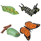 DOITOOL 4pcs Insect Figurines Life Cycle of Butterfly Plastic Caterpillars to Butterflies Bug Figure Toy Kit Educational School Project for Kids Toddlers