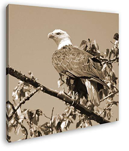 deyoli Aliento Alucinante Águila de Cabeza Blanca Efecto: Sepia como Lienzo, diseño Enmarcado en Marco de Madera, impresión Digital Marco, no es un póster o Cartel, 70 x 70