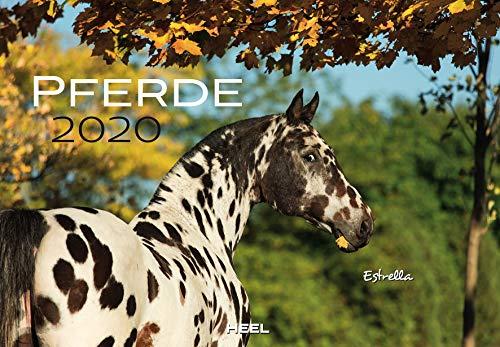 Pferde 2020: Der Sympathische Pferde-Kalender mit den charmanten Namen