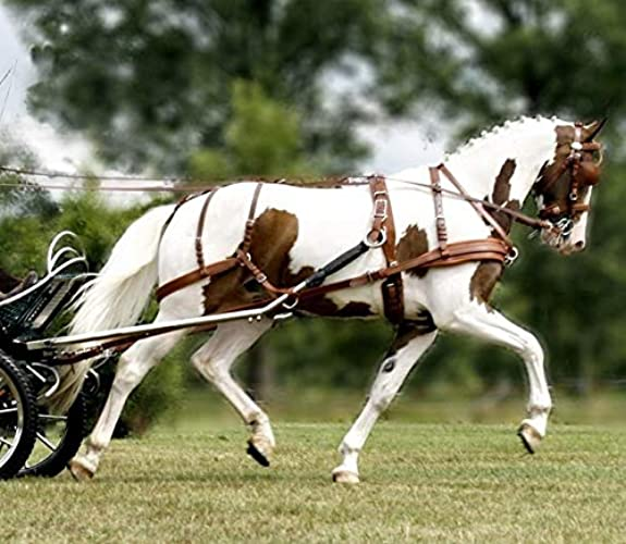 Harnais Leather Tech Ideal 2 en 1 - chevaux de trait, havane, antidérapantes, à dé