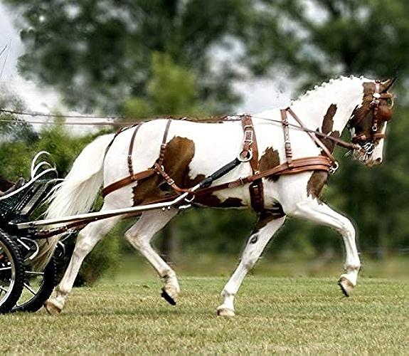 Harnais Leather Tech Ideal 2 en 1 - chevaux de trait, noir - brun, antidérapantes, à dé