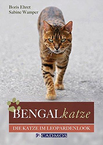 Bengalkatze: Die Katze im Leopardenlook