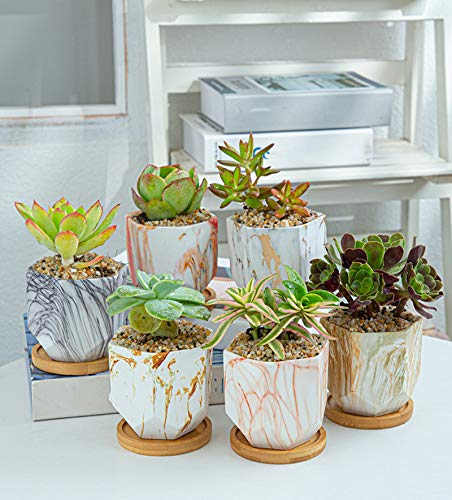 LYYJF Succulent Pot Ceramic Hexagonal Set of 6, Plant Planter with Drainage Hole Cactus Bonsai Herb Container for Home Water Transfer Flower Pot,6pcs