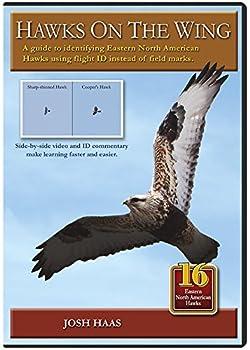 Hawks on the Wing  Identifying Eastern Hawks in Flight
