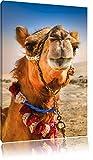 Pixxprint Lustiges Kamel in Wüste/Format: 80x60cm /