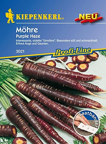Möhre Purple Haze