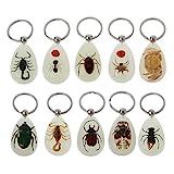 S-TROUBLE Llavero de Insectos Reales Que Brillan en la Oscuridad Natural, colección de especímenes de Animales de Escarabajo