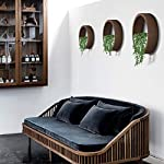 Wistwoxxon 3 Pack Set Wall Planters,Modern Round Glass Wall Planter Succulent Planter Circle Iron Hanging Planter Vase for Herb,Small Cactus Perfect for Balcony, Room and Patio Decor (Black) 12 ♪♪Appearance and Design:Round metal hanging wall planter with glass baffle for planting real or faux small plants, flowers, succulents, air plants or cacti, Every part has been carefully designed, simple curves outline the simple and stylish atmosphere, Add a splash of color and style to your indoor spaces ♪♪Attention & Installation: Mounting with screws or wall hooks, ATTENTION: We prefer succulent plants,air plant,faux plants and some plants which doesn`t need much water. Because water will drip from 3 mount holes on the back of wall planter. ♪♪Material and Size: Stabilized iron alloy metal with powder coating ensures long lasting color and withstands extreme weather conditions. Tempered and limpid glass feasts your eyes, add visual intrigue to this wall hanging. Do not rust and no unpleasant smell. Size:Large:Thickness:5cm/1.9inch Diameter:30cm/11.8inch, Medium:Thickness:5cm/1.9inch Diameter:20cm/7.8inch, Small:Thickness:5cm/1.9inch Diameter:15cm/5.9inch