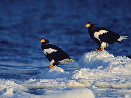 Photographing Winter Wildlife