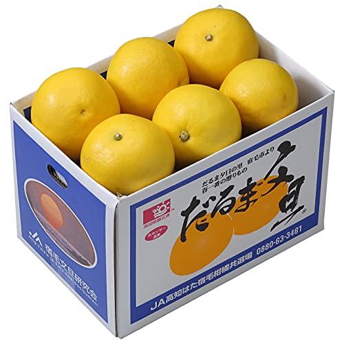ぶんたん だるま文旦 大〜2L 7〜10玉 4kg以上 高知県産 ブンタン