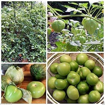 Tomatillo Samen - Toma Verde - Grüne Schale - Bio (100 Samen)