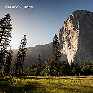 Calming Nature Sounds and Sounds of Nature, Session 2