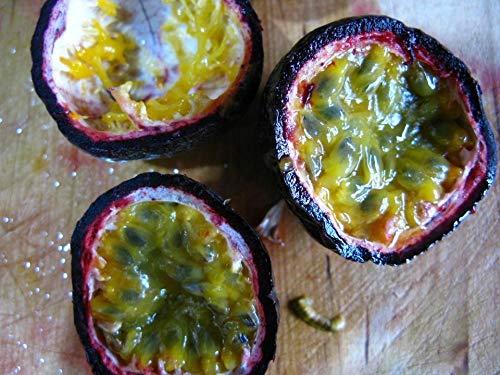 Portal Cool Passion australienne Fruit de Violet/Noir 10 - Liveseeds graines
