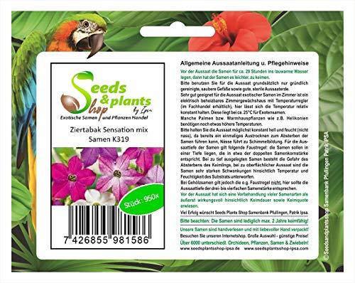 Stk - 950x Ziertabak Sensation mix-Ziertabak Flügeltabak Samen Pflanze K319 - Seeds Plants Shop Samenbank Pfullingen Patrik Ipsa