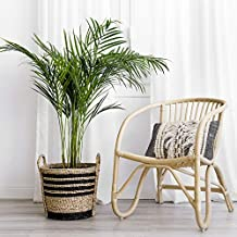 Kenay Home Basket Planter Jute Trop Black (Width), 5 x 32 x 35 cm (WxHxD)
