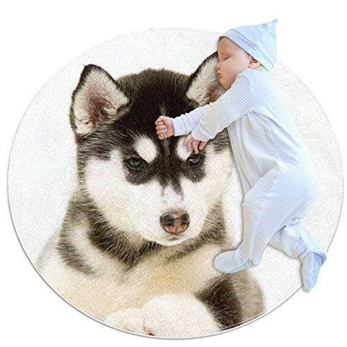 Alfombra de área Redonda Alfombra Cachorro de Husky Siberiano (5) Alfombrilla Antideslizante...