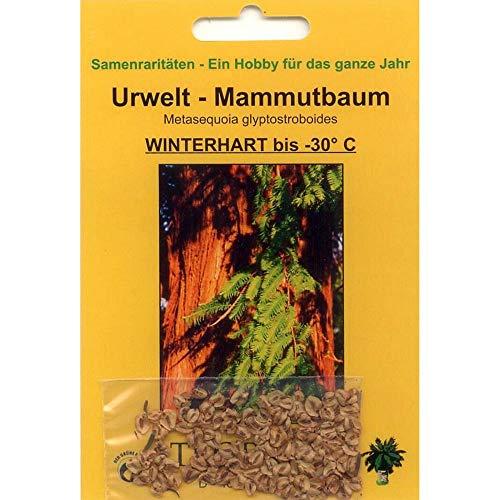 Bonsai - 100 Samen v. Metasequoia glyptostroboides, Urweltmammutbaum, 90040