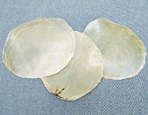 perlmuttscheiben conchas Natural 1kg aprox. 9–11cm