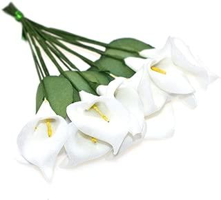 Best calla lily and mini calla lily Reviews