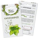 OwnGrown Katzenminze Samen für Katzen: Premium Katzenminze Saatgut (Nepeta cataria) für echte Katzenminze Pflanze – 150 Samen Katzen Minze als perfektes Katzen Geschenk – Catnip Pflanze Saat