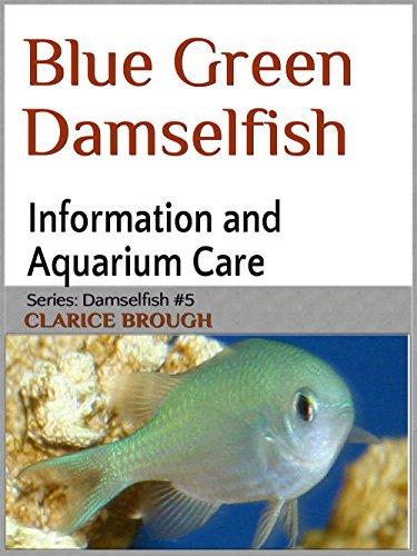 Blue-green Chromis Damselfish (English...
