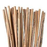 Varillas de bambú, varillas para plantas, 120 cm, color natural, diferentes longitudes