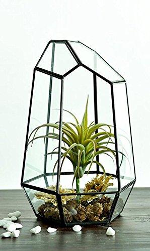 Gzq plantes support en verre transparent géométrique Terrarium Container polyèdre Boîte bureau Pots de fleurs artificielles Fougère Moss Air plantes miniature extérieur Fée Jardin Cadeau décoratif