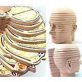 Modelo de cráneo Humano, Cabeza de anatomía, cráneo, Cerebro, arteria Cerebral, Modelo anatómico para la enseñanza de Suministros médicos, 12 Piezas, Modelo de Cerebro CTMRI de Corte transve