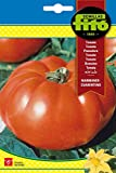 Semillas Fitó 290 - Semillas de Tomate Marmande Cuarenteno