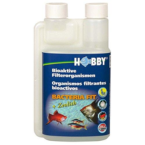 Hobby 51020 Wasseraufbereite Bacteria Fit, mit Zeolith, Bakterien zum Animpfen und Auffrischen, 500 ml